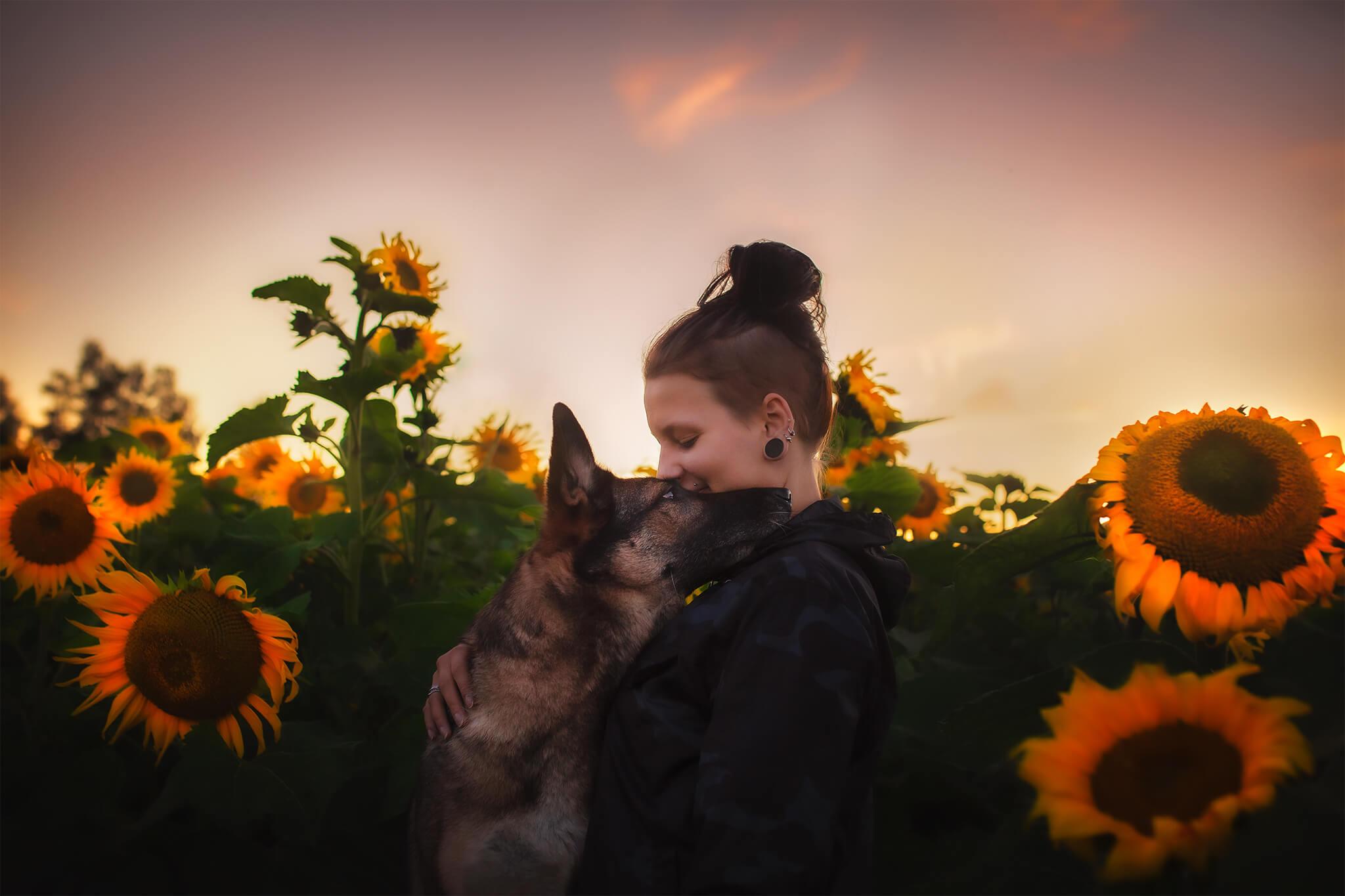 Saksanpaimenkoira ja ihminen auringonkukkien seassa.